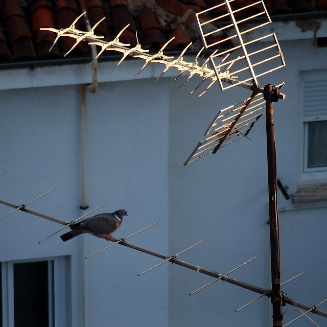 Antena de oro con paloma. /Antenna gold dove.