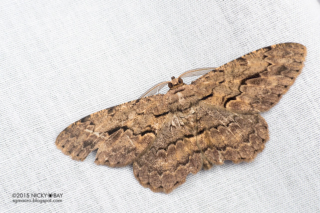 Moth - DSC_4682