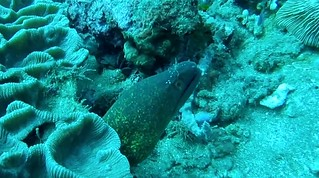 Moray eel and cleaner shrimp (GoPro screenshot)