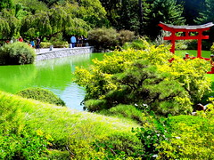 Japanese Hill