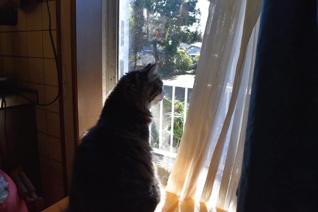 窓の外向いている