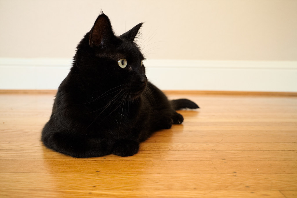 Our black cat Emma rests on the hardwood floor