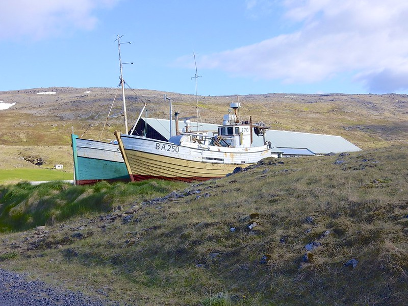 north to puffins 39