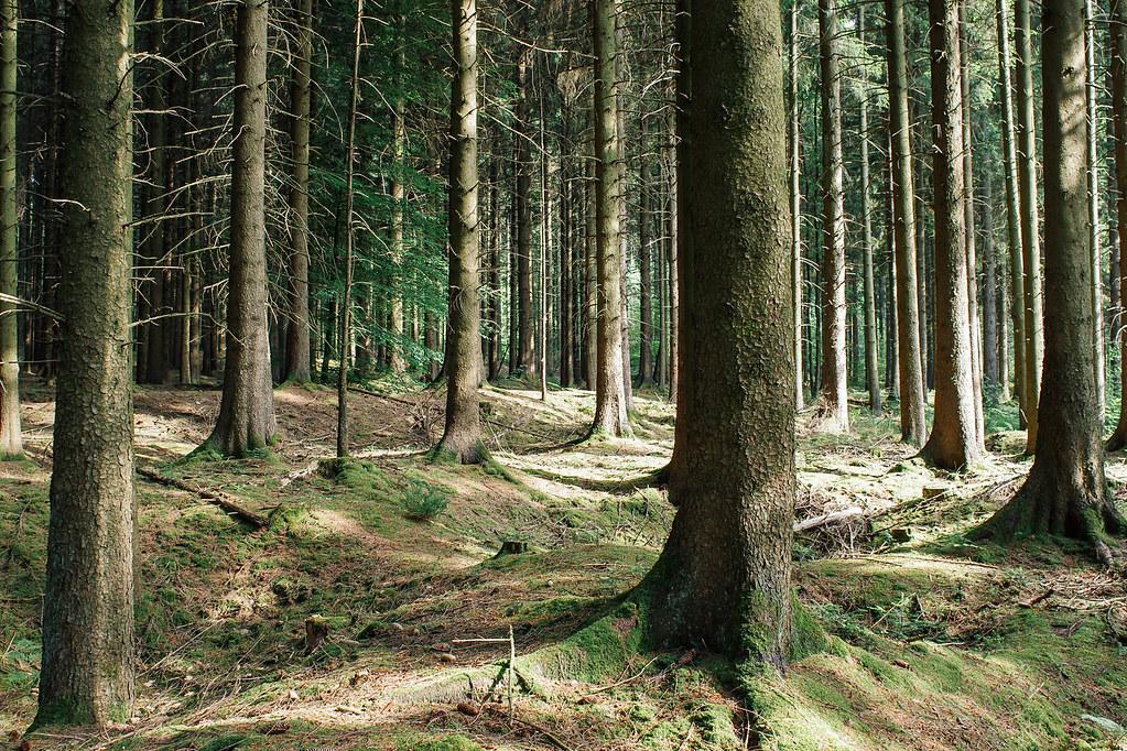Tourisme vert en Meuse - de la vallée de la Meuse à l'Argonne - À l'ombre des pins