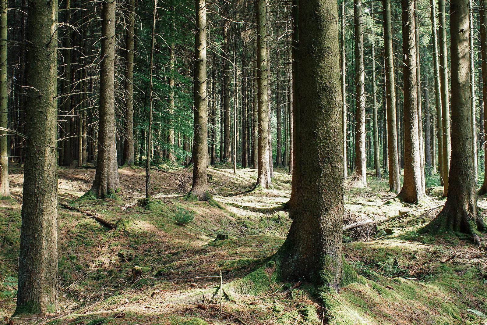 Tourisme vert dans la Meuse - de la Meuse à l'Argonne - À l'ombre des pins