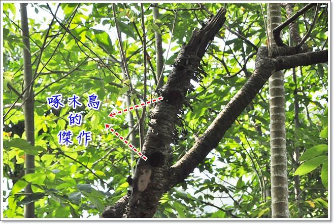 DSC_4732