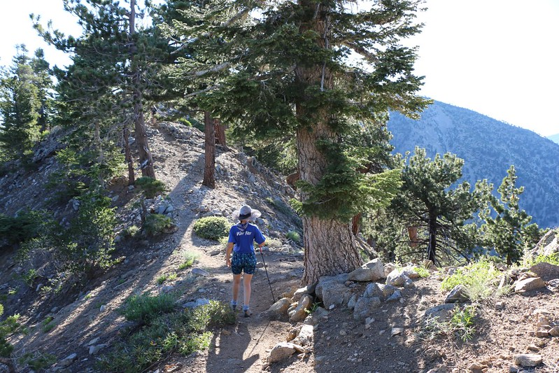 Hiking the PCT on the narrow ridge between Throop Peak and Mount Burnham.