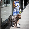 Summer dress and fuzzy friend. Yorkville