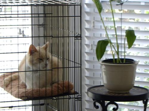 cats cat feline