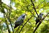 Bali Bird Park_212 by Mirna Rizka