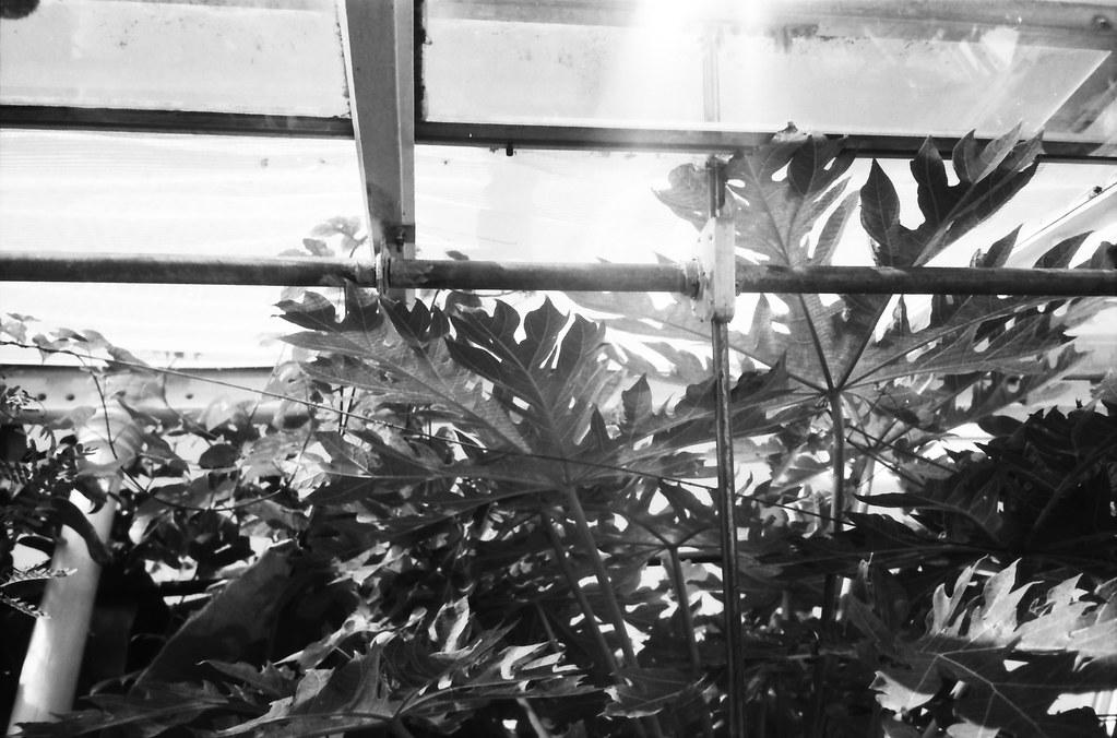 botanisk.