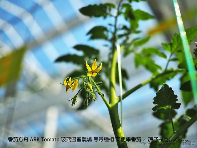 番茄方舟 ARK Tomato 玻璃溫室農場 無毒種植 天使串番茄 38