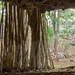 40. Cenotes, Yucatan, Mexico-7.jpg por gaillard.galopere