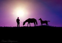 Silhouette a cavallo