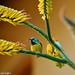 """South Africa's fabulous """"Sunbird"""" !!! :D"""