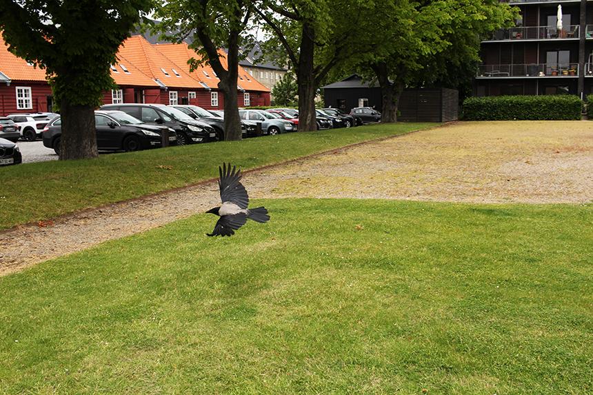 grey crows sm