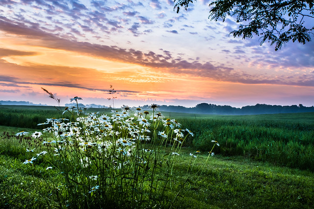 Sunrise, Daisy, Daisies, Sky, Clouds, Rural, HDR