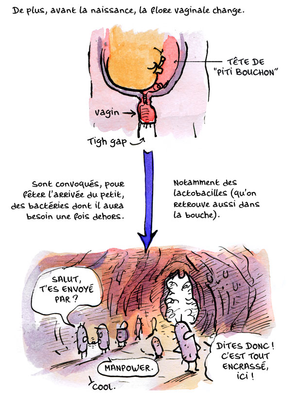placenta09
