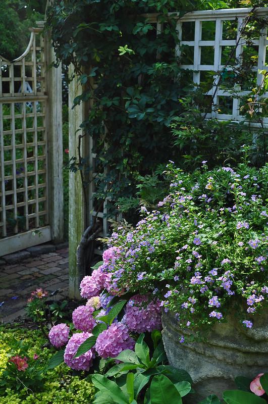 Hydrangea Planter (2)