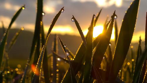 sunshine sunrise slovakia waterdrops jasenie banskábystricaregion tamoadamo