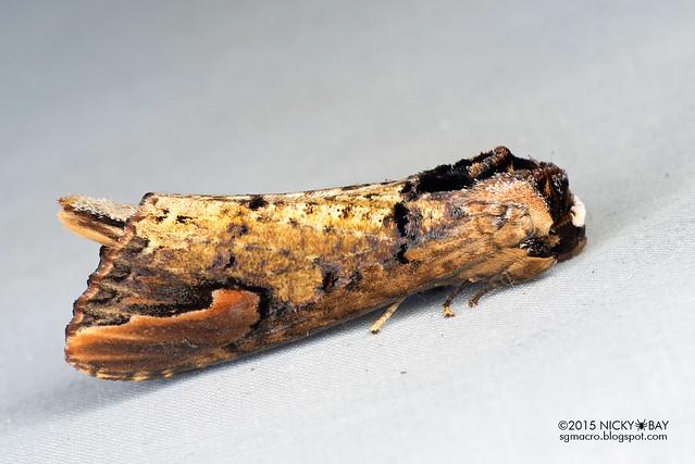 Moth - DSC_4687