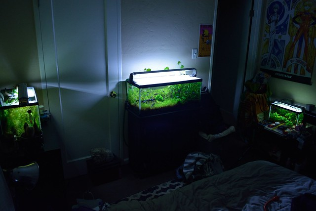fish tank bedroom 3 tanks one bedroom 5 10 20l 7 22 15 the planted tank forum 11544