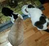 Hobbs Penn and Portia eating by killearnan