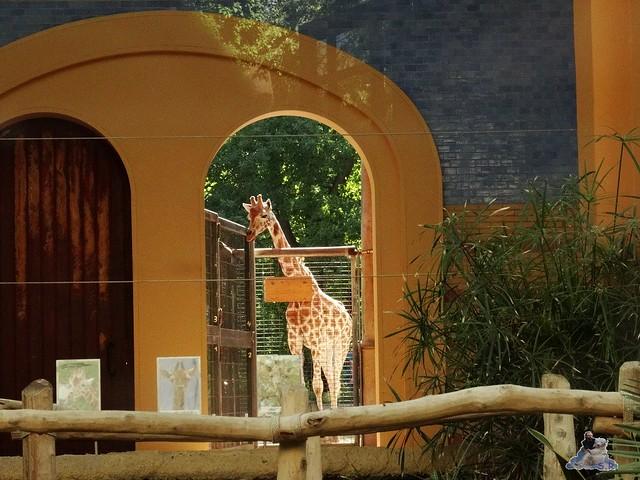Zoo Berlin 05.08.2015 010