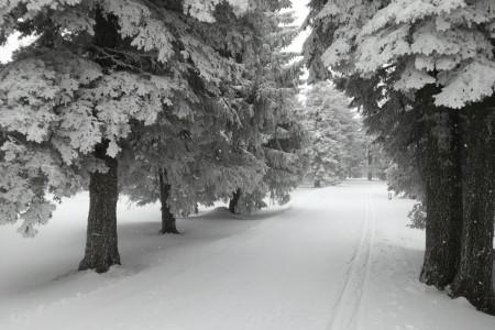 Užijte si o víkendu pořádné sněhové nadílky!