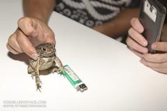 Frog dinner