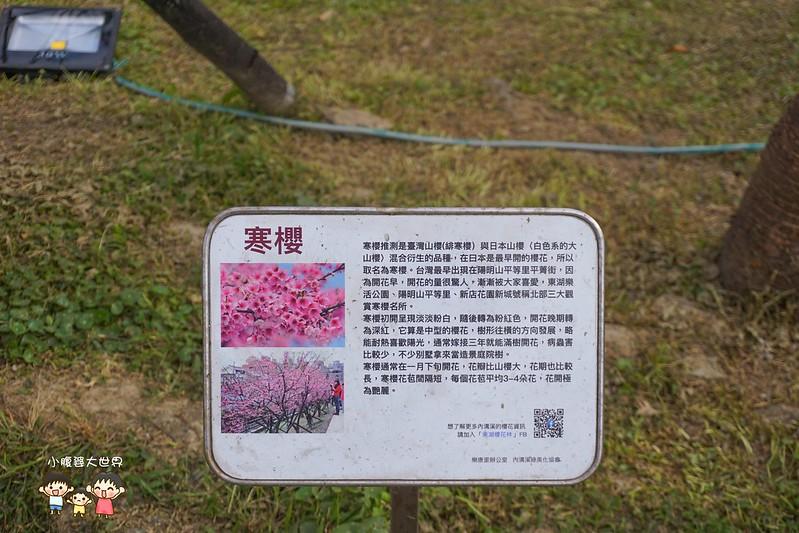 台北櫻花秘境 009