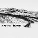 Dog Sleigh Ride by alanrharris53