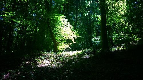 shadow nature forest hungary tolnamegye sötétvölgy