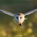 Head to Head by birdtracker