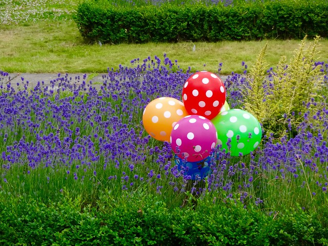Balons on flowers