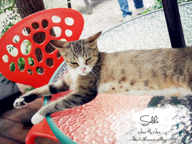 可愛貓咪 (4)