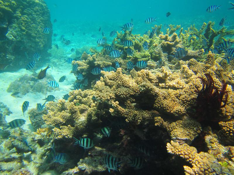 El Nido Reef