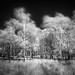 Swaying by vuzephotography.co.uk