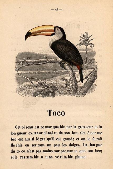 015- Alphabet illustré des oiseaux- 1885- MM. Travies-BNF