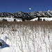 South Mesa Trail in Winter with Sumac - City of Boulder Open Space and Mountain Parks