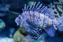 Aquarium of the Smokies-64