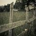 Fence by Eli Goren