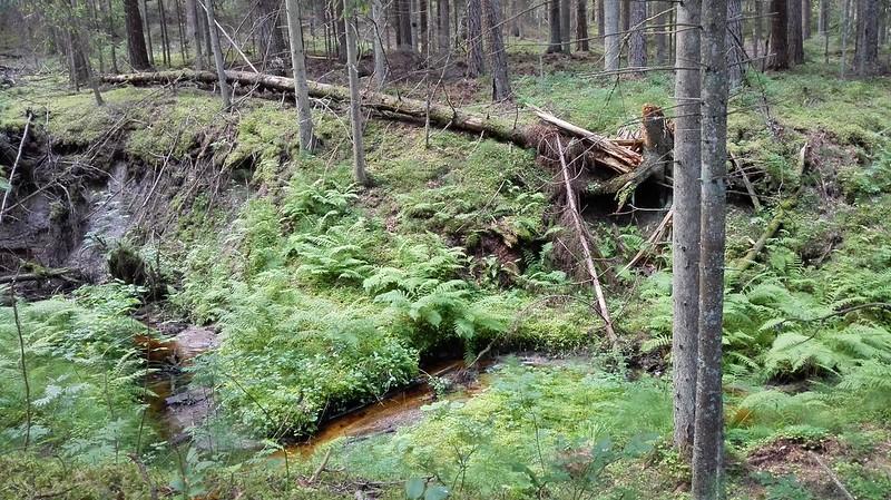 Mežā pa ceļam uz Sietiņiezi