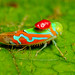 Leafhopper (Cicadellidae) 113p-25028 by CAPE images