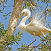 Egret 1 by maureen_g