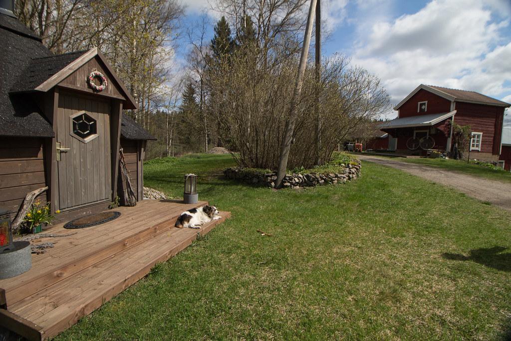 Koira terassilla, Kokemäki, Suomi