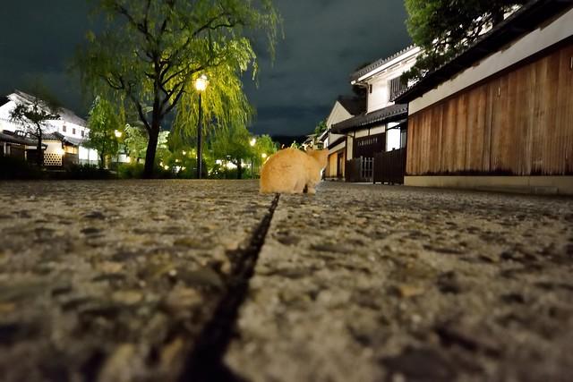 倉敷美観地区の夜景6