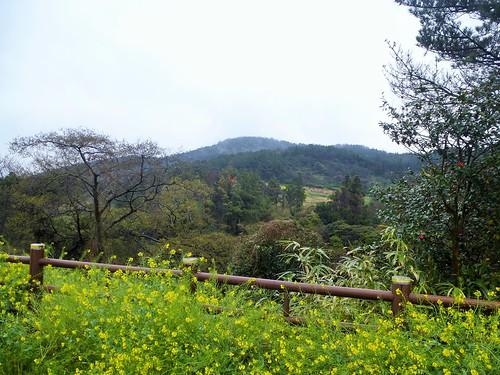 Co-Jejudo-Seogwipo-Sentier Olle 9 (8)