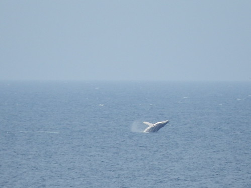 Dungeon Provincial Park - breaching whale