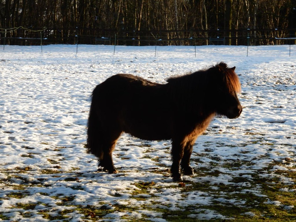 Little horse Lenham to Charing